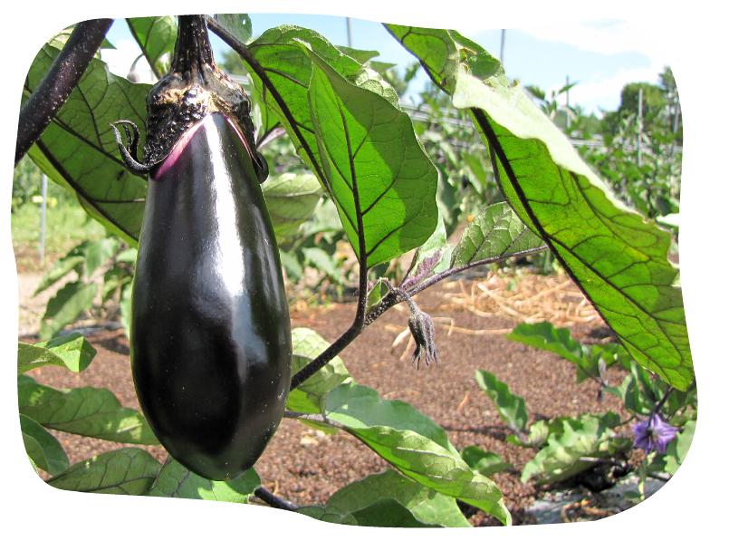 旬の野菜、無農薬、山形、宅配