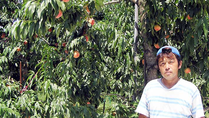 おいしい桃で人気の果樹園 阿部さん(山形)
