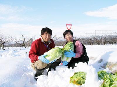 雪室白菜の生産者