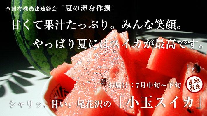尾花沢スイカ おいしい小玉スイカです