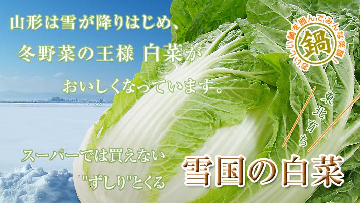 東北山形のおいしい白菜